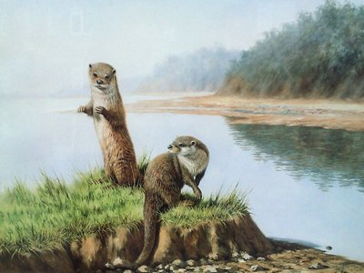 two-otters-12325
