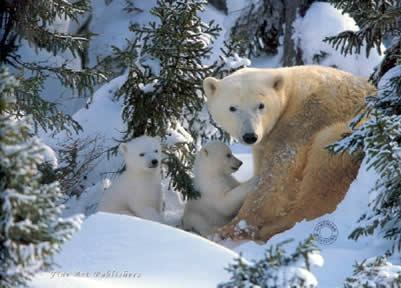 warmth-of-nature-polar-bear-cubs-1205