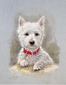 Westie Pup Study