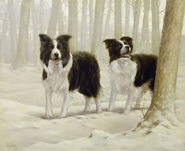 Winter Friends I - Border Collies