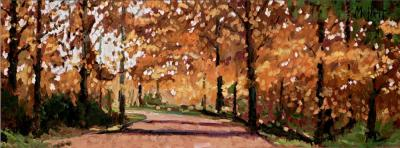 woodland-walk-18125