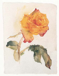 yellow-rose-2580