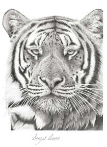 Bengal Prince by Peter Hildick