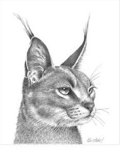 Caracal by Peter Hildick