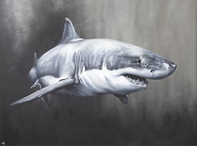 Carcharodon Charcharias by Dean Martin