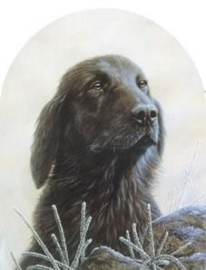 Classic Breed Flat Coated Retriever by John Silver