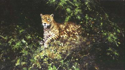 Jaguar by David Shepherd
