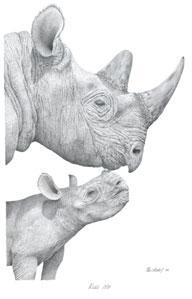 Kiss Me - Rhinos by Peter Hildick