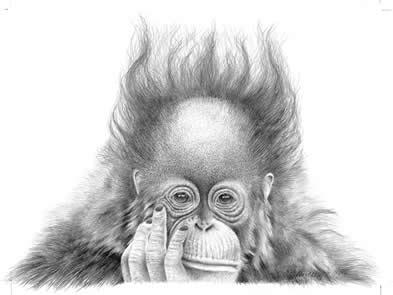 Split Ends - Orangutan by Peter Hildick