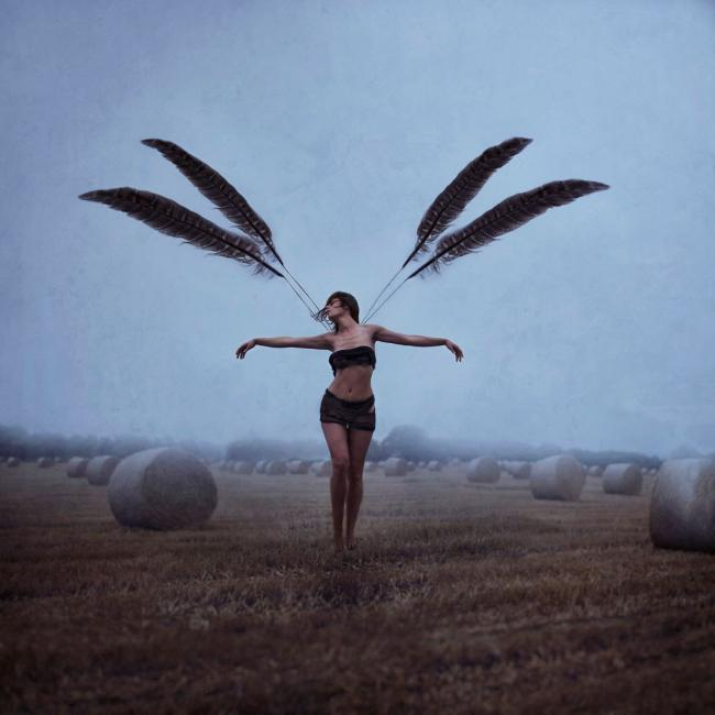 With Brave Wings She Flies by Dolly