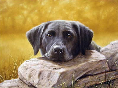 Black Lab Lazing by John Silver