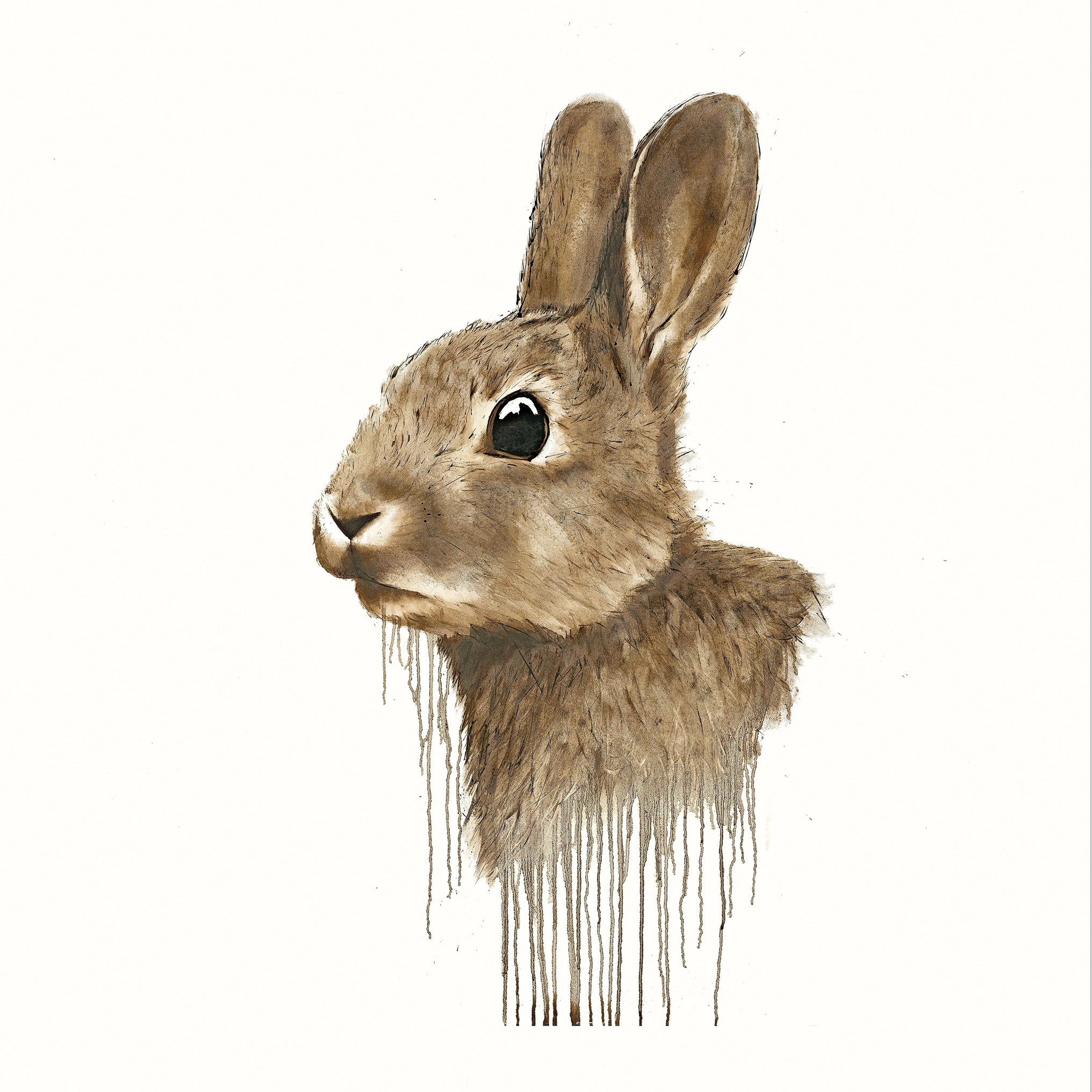 Cotton Tail by David Rees