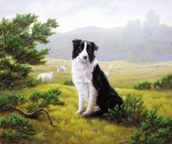 Ever Watchful - Border Collie by John Silver
