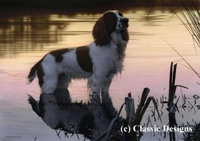 Jasper (Springer Spaniel) - Canvas by Steven Townsend